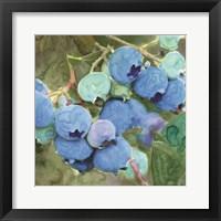 Blueberries 2 Framed Print