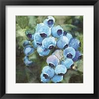 Blueberries 3 Framed Print