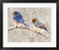 Eastern Bluebirds 1 Framed Print