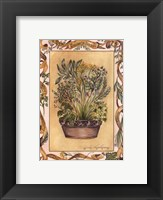 Framed Culinary Herbs