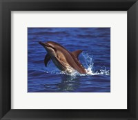 Framed Dolphin - photo