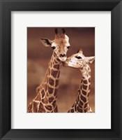 Framed Giraffe First Love