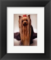 Style And Set Framed Print