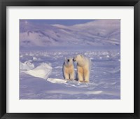Framed Polar Bears