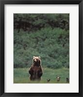 Framed Grizzlies