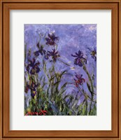 Framed Iris