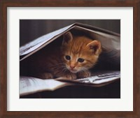 Framed Smart Cat