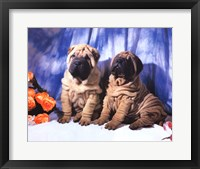 Framed Shar Pei Pups