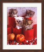 Framed Cats and Cherry