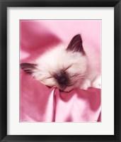 Framed Kitten Sleeping