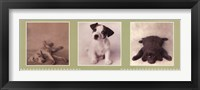Low Down Doggie Blues Framed Print