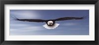 Framed Eagle