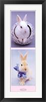 Framed Bunnies