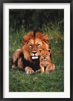 Framed Lion And Baby