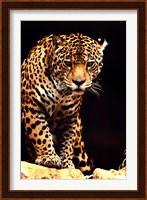 Framed Leopard - photo