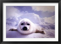 Framed Seal Pup