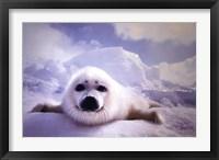 Framed Seal Pup
