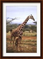 Framed Giraffe And Baby