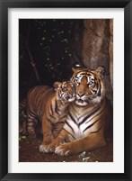 Framed Tiger With Cub