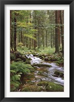 Framed Stream in Forest