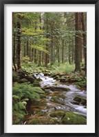 Framed Stream in Forest
