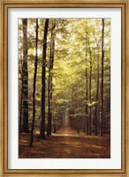 Framed Forest Path