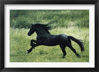 Framed Black Horse Running