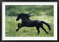 Framed Black Horse Running