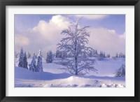 Framed Winter Tree