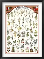 Framed Aromatic Herbs