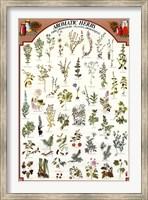 Framed Aromatic Herbs