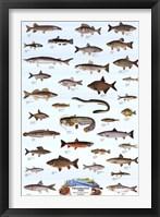 Framed Freshwater Fish