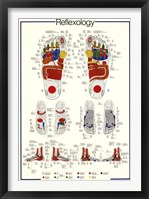 Framed Reflexology
