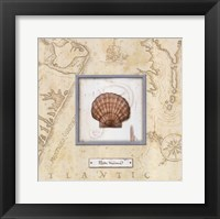 Sea Treasure II Framed Print