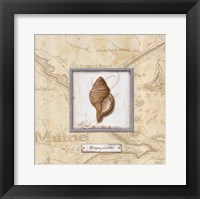 Sea Treasure IV Framed Print
