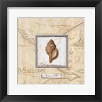 Sea Treasure IV Framed Print