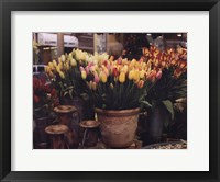 Framed Tulips, Paris
