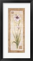 Gladiola Framed Print