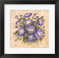 Morning Glory Framed Print