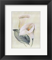 Framed Calla Lily I