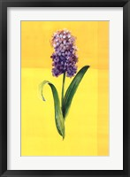 Flower on Yellow Framed Print