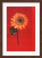 Framed Flower on Red