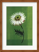 Framed Flower on Green