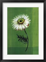 Flower on Green Framed Print