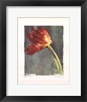 Aflame II Framed Print
