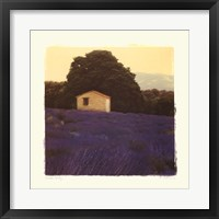 Lavender Country Framed Print
