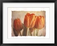 Bellezza I Framed Print