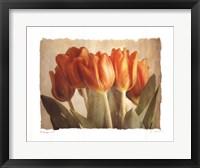 Bellezza II Framed Print