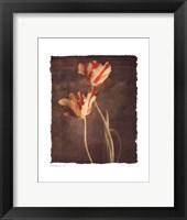 Allegria II Framed Print