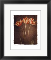 Allegria IV Framed Print